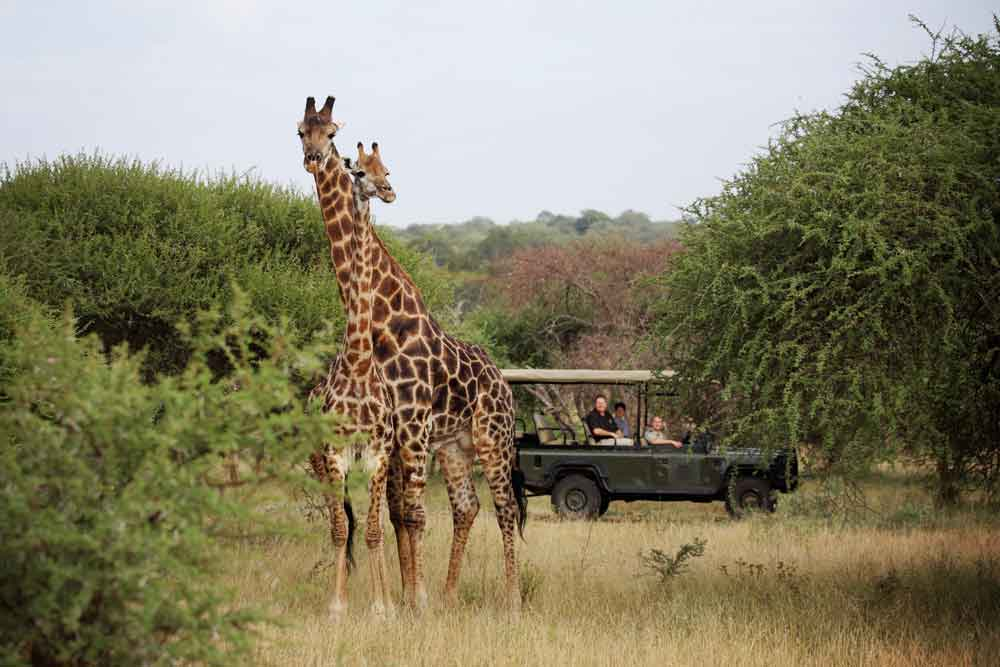 exclusive kruger park safaris wildlife south african tours fromKrugerpark Safari Kosten.htm #21